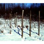Running Fence.III