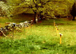 "Charles McQuillen's ""The Bluebird"" at Weir Farm"