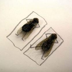 Medium a Month: Dead Bugs