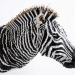 Federico Uribe's Zebra